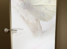 Двери межкомнатные Океан Glamour  одностворчатая дверь Буревестник-2 Бабочка
